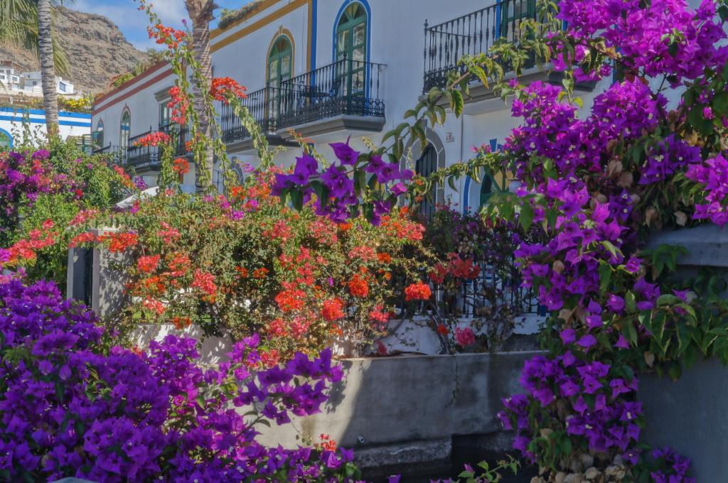 Blumen Fotografie