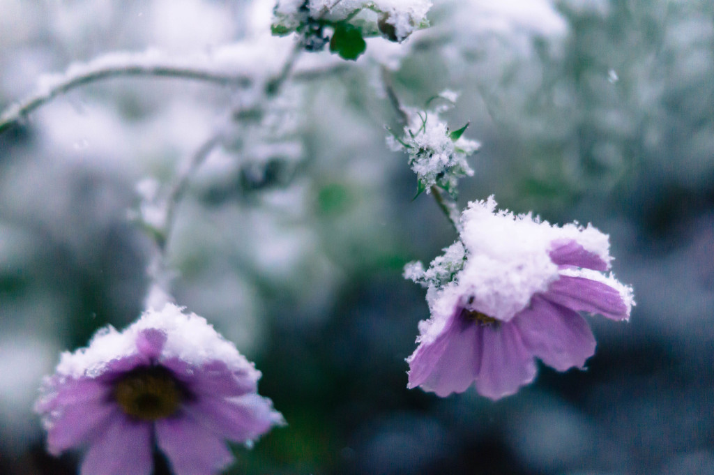 Blumen Winter Foto