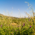 Kreta Blumen Berge Flora Foto