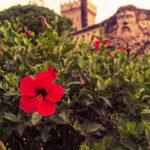 Mallorca Paguera Urlaub 19